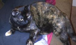 Friendly, Affectionate 1.5 year old Tortise Shell female. Owner moving. I have rescued her to find her a good home. If you will provide a loving and secure home she's a sweetie. She prefers to be the only cat in the house unless she could be placed with