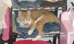 Yellow Striped Female Adult Cat needs new home. Well tempered, inside/outside, always uses litter box. Independant most of the time but occasionally will cuddle ur lap when feeling lonely. Doesnt socialize well with other cats. Already spayed. Family is