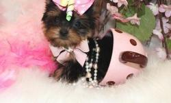 Homely and cute male and female Yorkie puppies for nice houce,they are vet check,registered/registerable, Current vaccinations, Veterinarian examination, Health certificate, Health guarantee they are very social with every one and love to play with kids
