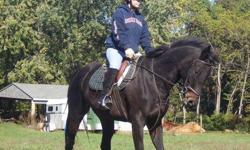 Must see! 16.2 dark bay athletic 14 year old Thoroughbred mare seeking new home. Both of Annie's owners off to college. Seeking loving confident rider. Trained in both Hunter/Jumpers and Dressage. Shown in both disciplines. Direct photo request to