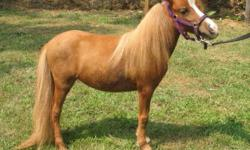 Hello I have two minis for sale a little mare that can not be bred ,and a stallion there both were from kentuckey , I also have a conure that is a year old for sale with cage 500.00 please email me at rigelblu2000@yahoo.com