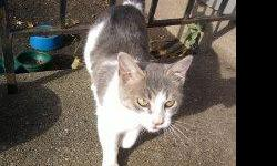 Hi..my name is Sabrina & I`m looking for someone to love me and who I can call my own. I don`t have a home right now & have been living outside sometimes and sometimes with a nice guy who`s been trying to help me. My mom was taken to the Pound and I`m
