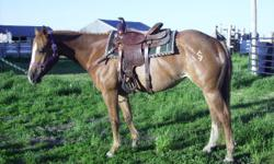Light roany sorrel with blaze and stockings. Very quiet and kind. Ranch ridden, worked cows, crosses rivers and bridges. Easy mover. Very refined but nicely muscled. Potential for a Western Pleasure class. Working on reining. Pedigree includes King, Major