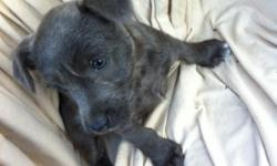 We have an adorable 10 week old puppy! We really need to find him a loving, caring home. He is playful and active! :) Grayish-brownish coat. Jack Russel Terrier. Male Dewormed. We are in everett. Pick up only Please contact by email Or text/call -- for