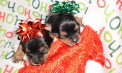 ?2 little yorkies for sale! 1 boy and 1 girl! Pictures on this page! Go check them out! ADORABLE! https://www.facebook.com/ourlittleyorkiesnwi Please visit our link for adorable pictures!  Adorable Yorkshire Terrier puppies! Only two left! A deposit