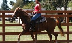 4 year old gelding. Chestnut. Flaxen mane/tail. Trail ridden