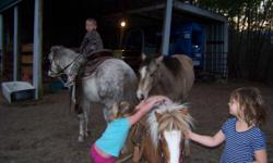 super kid safe trail riding mini mare,never bites or bucks,5 yr.old beautiful painted mare.great for kid parties or jr.show or parades.