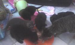 1 boy and three girls.. need good homes just 8 weeks old.. too cute to pass up