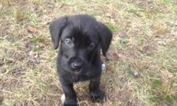 I was born on Oct 5, 2012. I am a black male my mother was a labradoodle and my dad was a purebreed lab. I have all my shots and worming up to date.