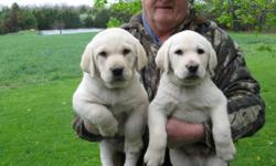 Brillant, Blocky, Beautiful. Bred for Intelligence and Calmness. Great for Hunting and Family Pet. 417-589-6330 417-350-8476