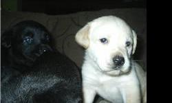 they are 5 weeks old at the end of this month they are good to go home with you will come with shot and dewormed