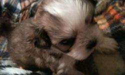 perritos pequenos preciosos con papeles llamar
