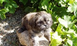 Welcome  We are a small 3rd Generation Kennel in Southern California. This was a Family project that started from 2 Lhasa Apso and has now expanded to become a love of our life. We are located in Southern California North of Lake Mathews in an