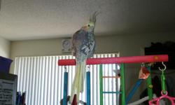 me an my girl friend have a cockatiel we call beakers an we want t bring anther little guy into our family. we dont have a lot of front money to go an buy a $300+bird were looking into adopting a FREE bird any small or medium or large parrot bread