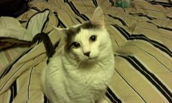 Need to find a new loving home for my cat Shadow. Shadow is a 5 year old male, domestic short hair cat. He is white with a grey tail and grey on his head. He is neutered, but not up to date on his shots. Shadow is a INDOOR cat only and is boxed trained.