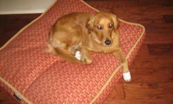 We have lost a small female golden retriever that weighs about 55 lbs. She was lost on friday June 17 2011 around 8 am. Please let us know if you find her becuase she does have medical needs.