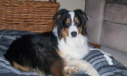 Lost Jan. 26th near Chain O Lakes State Park. Male, Black and White with a little bit of brown, approximately 50 lbs. We are extremely heartbroken and would appreciate any leads to bring our dog home. please call with ANY information.