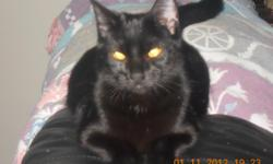 Lost somewhere in or near Roy,Wa area on Saturday Sept 8 2012.Last seen @ 349th ST E & Kinsman RD. Med size Black ,spayed,female cat, 1& 1/2 yrs old, w/golden eyes & white hairs on her chest. She has no collar, is very sweet & loving. She has other