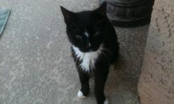 LOST!! Black Male cat with white chest. Very friendly. No front claws. 18 years old and needs medicine. Skinny!