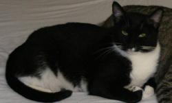 black & white female tuxedo missing 11/3/2010 in Sylacauga Ala...Black on top w/ white chest,belly,tipped front paws & boots on hind feet. She has 2 lopsided white dots under her nose...look like lips 2 kiss u w/. 8-9lbs, green to yellow eyes ,1 1/2 yrs.