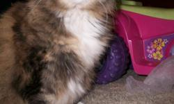 13 year old fat calico (brown, orange and a little bit of white) rescently shaved. If found please call!!!! 661-34 3-4079. Was lost in the rosedale area around Jewetta and Brimhall. She has been part of our family for 13 years and is in door only!