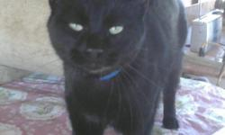 Have you seen our family cat? His name is Sambo and he was last seen at his home at 1630 Betty Circle, just north of Loma Heights Elem. School in Las Cruces. He has been missing since 12/2/2010. He is black and neutered. Please help us get Sambo back