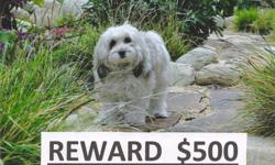 PLEASE help us find our dog! Breed: Shih Tzu mix Color: White, tan and grey Sex: Femake Last location seen: near Van Nuys Valeria elementary school, 91405, near Sepulveda and Kester Last date seen: December 17, 2010 REWARD: $500 Please call: 818-535-3422