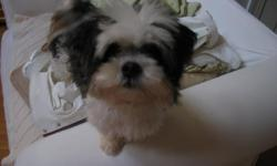 Scruffy black and white male dog LOST in Hampstead's Deerfield Subdivision 12/7/12. Wearing red collar. Very friendly. ****** REWARD ******