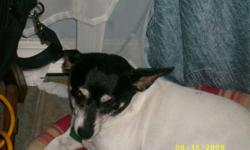Lost female, adult, fox terrier in Theodore Alabama on Dec. 31st. Her name is Dixie! Reward for safe return! Please contact Joann, Donnie or Alissa @ 251-653-1949
