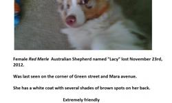Our 1 year old Aussie got out this morning at about 9:30am, 11/23/2012. She managed to take off her collar and chased after a jogger. She is a red merle, with brown markings and green eyes. She is chipped. She is very friendly. We live on