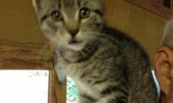 3 month old grey tabby female kitten, weighing 4.5 pounds, lost in the Dean Drive off of Old Stage Road area above Central Point. She is wearing a pink and white collar with her name and phone number