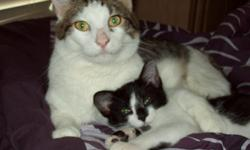 we have a white and black cat not yet full grown. very sweet plays with our 2 dogs and other cat. gets along great with our kids. we call him micky, we took him in but unable to keep em because we have three other animals.