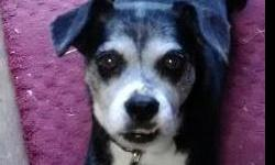 Lost in Beaman Park between Little Marribone Rd & Old Hickory Blvd in NW Davidson county. Friday 9/28, male black & white Rat Terrier mix named Tony, white nose, white socks on all feet and white tipped tail. About 22 pounds, 13 years old.