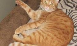 Last seen Thursday July 21st near Rancho Alisal Apartments in Tustin. We recently moved, and he may be heading far north to get to his old home. Name: Weasel Missing since: 7/21/11 Zip Code last seen: 92782 Age: 2 years old Weight: 10 lbs Hair: short