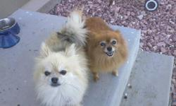 Lost 10 yr old Female Pomeranian on December 05, 2012. In Stetson Hills Ridgeview Area Color is Golden, please return her. She has a family and a saddend Male Pomeranian at home waiting for her to return She has been missing since around 8:30 pm on