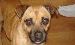 Our precious dog is lost in the Garden Grove area. She is tan with a black muzzle. She is small, no more than 15 pounds.