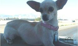 Please help us find our daughters dog. Missing since 9-11-2011 From the area of Charleston and Pecos. Missed very very much if you have seen her or have her PLEASE CALL 702 461-4614