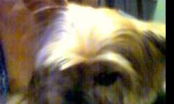"LOST DOG: Yorkshire Terrier aka Yorkie.  Lost 10/28/2012 around 25th and Mingo, Primary colors silver and tan, weighs 5 lbs, silky hair & not an outside dog.  Answers to ?Lily?Reward $100.00, --;"">-- or 918-663-004, -- S 101st East Pl, Tulsa, OK"