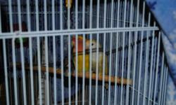 Two love birds, 1-cinnimon, 1-opliline, both are two years old. Hanging cage with stand (White). They need a good home, and will only go to such. Wouldn't sell but we moved and just no longer have the room. Sorry about the pics, difficult to shoot through