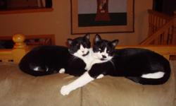 Two Black & White Domestic Short Hairs   8 ½  Years Old Litter Brothers De-Clawed (front) Neutered Shots Up-To-Date ·  Great with kids ·  Playful & loyal ·  Fun personalities ·  Loves cardboard boxes, kitty treats & toy mice