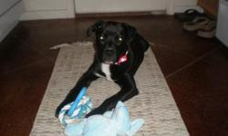 Lab mix needs a loving home, where he can run and play......owner is moving and dog cannot go with. He is neutered, potty trained, crate trained, well behaved, good with other dogs and very good with people. He will come with an ectra-large crate, toys,