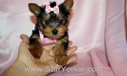Congratulations ? you have found the best place in the country to get your new teacup puppy.   The Star Yorkie Kennel brings you the best selection of teacup puppies and assures you will be happy with your new baby.     The puppies