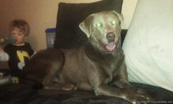 FOUND: Appears to be lab mix. Brown short wirey fur. Grey face and around ears. Very sweet, loves to lick. NOT fixed. Trying to find his family. Found on Cecil Johnson rd near mckamey. We are in the western ave/ amhurst area. Call --