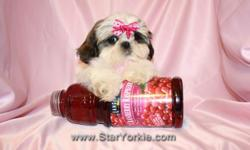 Visit our website www.StarYorkie.com now to see pictures and info for all available puppies. All of our puppies are registered, small, cute, healthy, and playful and come with health guaranty, free vet check and a complete puppy package. Thank you for