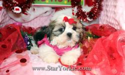 Tiny Teacup & Toy Yorkie, Pomeranian, Maltese, Havanese, Maltipoo, Morkie, Shih-Tzu, Cavalier and more...  Visit our website www.StarYorkie.com now to see pictures and info for all available puppies, or give us a call to find out about