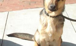 He is a 2 year old male. has all shots, is fixed and licensed. Good with kids, very sweet dog $100
