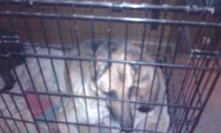 Free to a home without other dogs or cats. Zeus is a 4 year old German Shepard male. He is neutered. He is also house broken and kennel trained. He obeys the basic dog commands. Zeus is dog aggresive and cat aggresive.