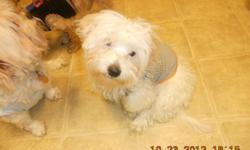 have a great maltipoo male who needs a new home we call him snoopy, hes a adorable he was born 7-1-2012.has all 3 baby shots been dewormed ,healthy,he has short legs ,playful.loving, trained to a potty patch. sold his sisther now he needs a family maybe