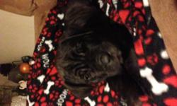 Male Neopolitan Brindle Puppies. Born November 1, 2012. Immunizations and dew claws done. Please call for information () -.