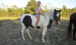 Mattie is a very nice horse. Nothing bothers her - stands for Ferrier, loads, ties, hauls great, gets along with others. We have rode her in parades and on trail rides. My daughter has outgrown her. Sheila 336-852-4240